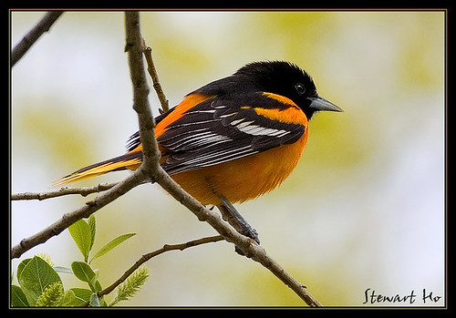 Tico Birder