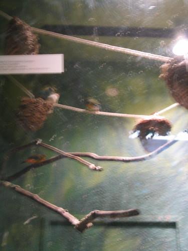 creationism, field trip, religion, pseudosc… IMG_1451.JPG