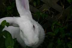 flower(0.0), grass(0.0), beak(0.0), animal(1.0), rabbit(1.0), domestic rabbit(1.0), fauna(1.0), angora rabbit(1.0), whiskers(1.0), rabits and hares(1.0),