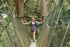 suspension bridge(0.0), adventure(1.0), rainforest(1.0), canopy walkway(1.0), forest(1.0), rope bridge(1.0), natural environment(1.0), jungle(1.0), spring(1.0), bridge(1.0),