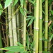 Bamboo forest, natural light