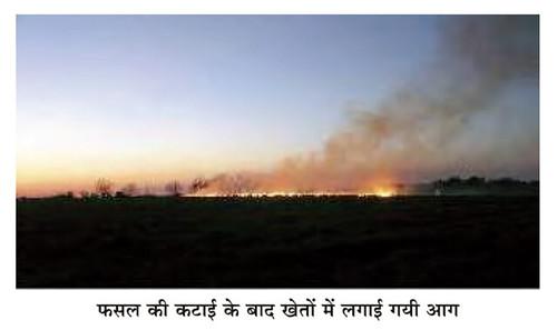 फसल की कटाई के बाद खेतों में लगाई गई आग
