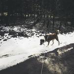 20180402-144106 - Licht & Schatten - Hund & Schnee