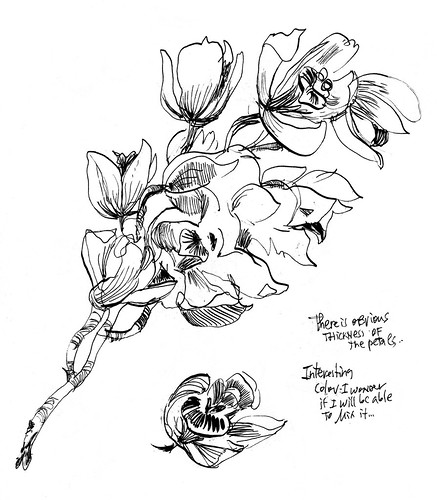 Sketchbook #112: Found Flower