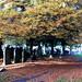 flaybrick_autumn_17