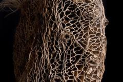 Prickly Pear Cactus skeleton