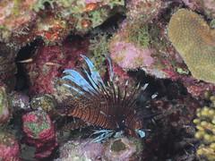Bonaire diving 2018