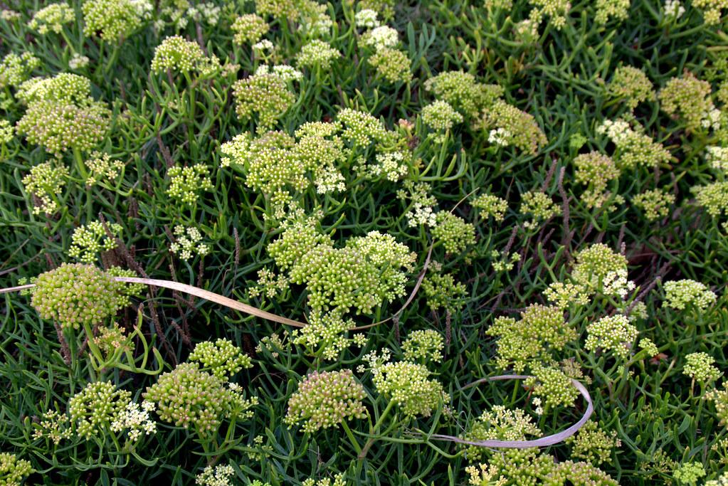 plantas de litoral