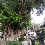 Taipei Walking Tour