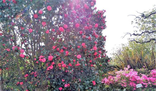 濱松花卉主題公園 (19)