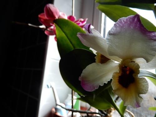bathroom orchid 1