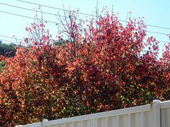 Autumn Over the Fence