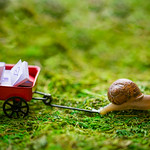 snailtilda