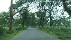 Driving through Terai Tea Gardens