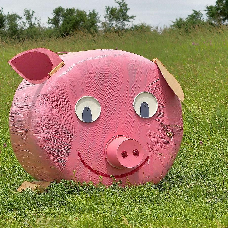 Un cochon, C'est rose.... 42392864021_71d52bbfe2_b