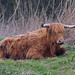 highland cattle (Explore) by DODO 1959
