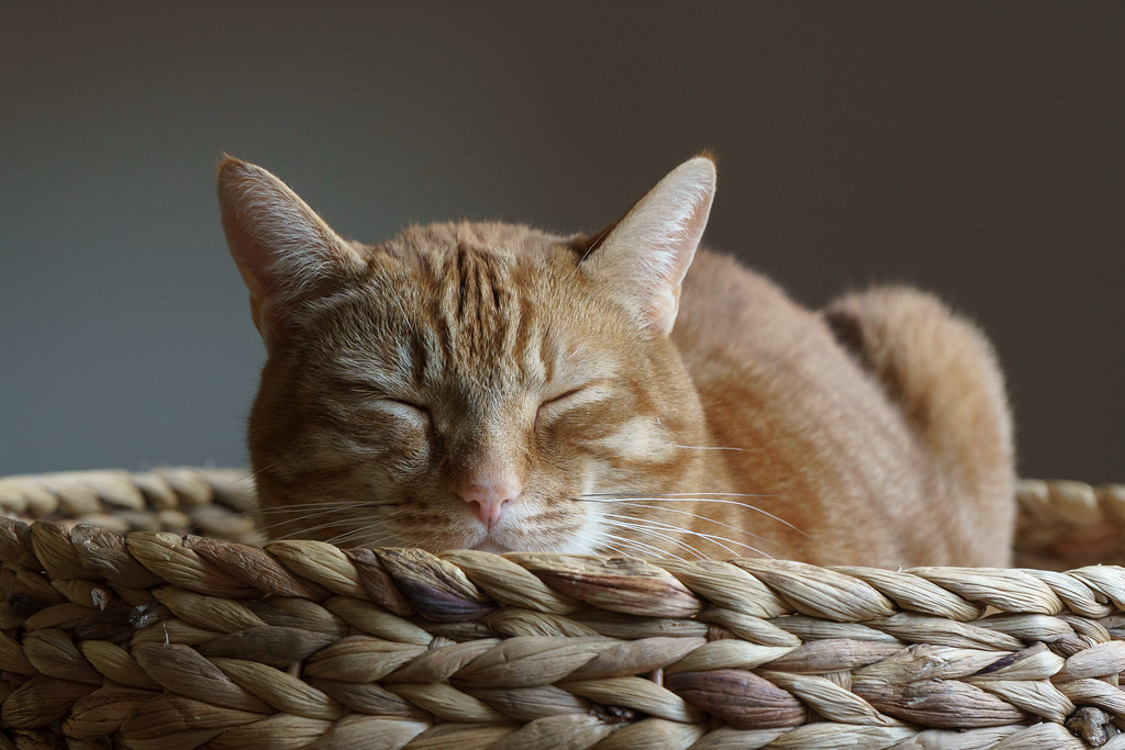 Our orange tabby cat Sam sleeps in the basket of a short cat tree