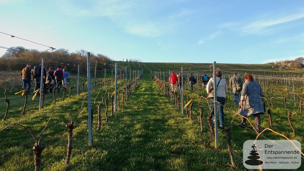 Weinwanderung von Stadecken nach Essenheim, Vinocamp Rheinhessen 2018