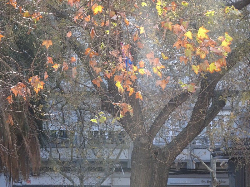 Iluminado árbol