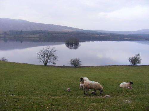 Lough Gartan
