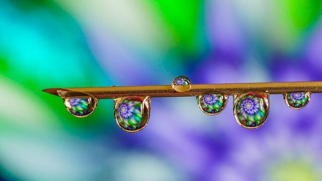 Drops on needle - 5334