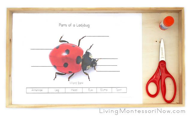 Parts of a Ladybug Tray