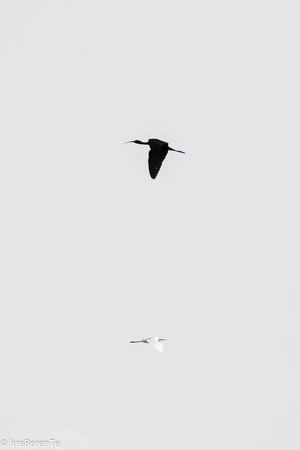 Where the Birds  ALways SIng
