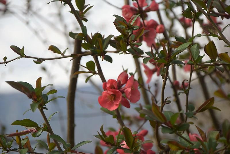 Flower Bush 15.04 (2)