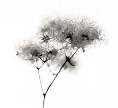Les Fleurs du mal_I