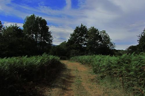 20120925 27 093 Jakobus Weg Bäume Farne Wolken