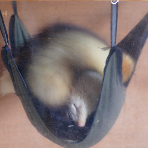 Let sleeping ferrets lie