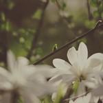 20180422-155258 - Spring Garden Bokeh -