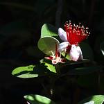 La flor i la llum