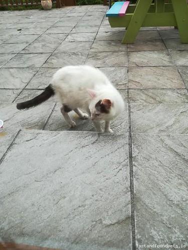 Sat, Jun 16th, 2018 Found Male Cat - The Local area, Enniscrone, Sligo