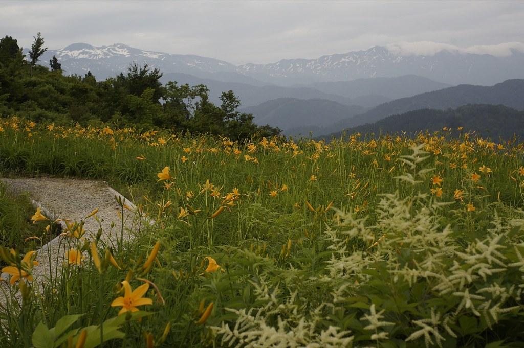 CONTAX Gレンズ総動員で挑む西山白山高山植物園その5