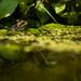 Garden Pond by Peter Quinn1