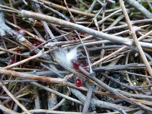 Ausgeraubtes Nest