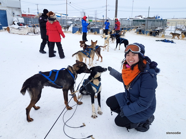 Dog sledding in Yellowknife