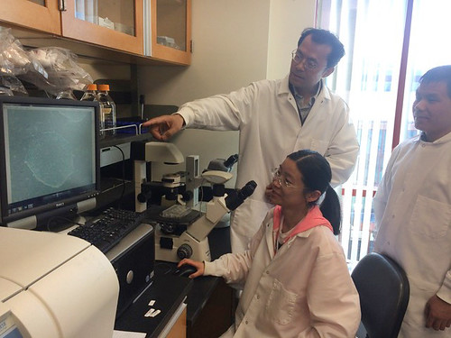 """Yong Tang (pointing at screen) and his graduate students examine human iPSCs they generated using """"super"""" OCT4 fusion proteins."""