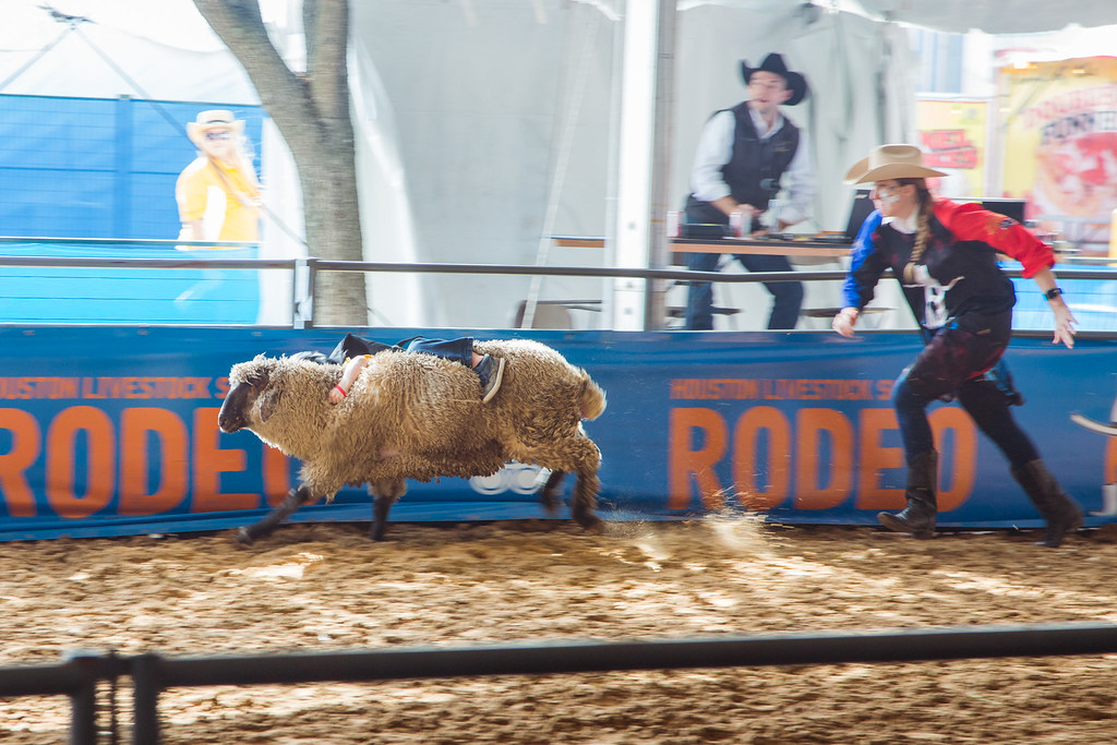 Mutton busting at the Houston Rodeo.