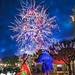 Belle & Beast enjoy Illuminations by Pandry 2015