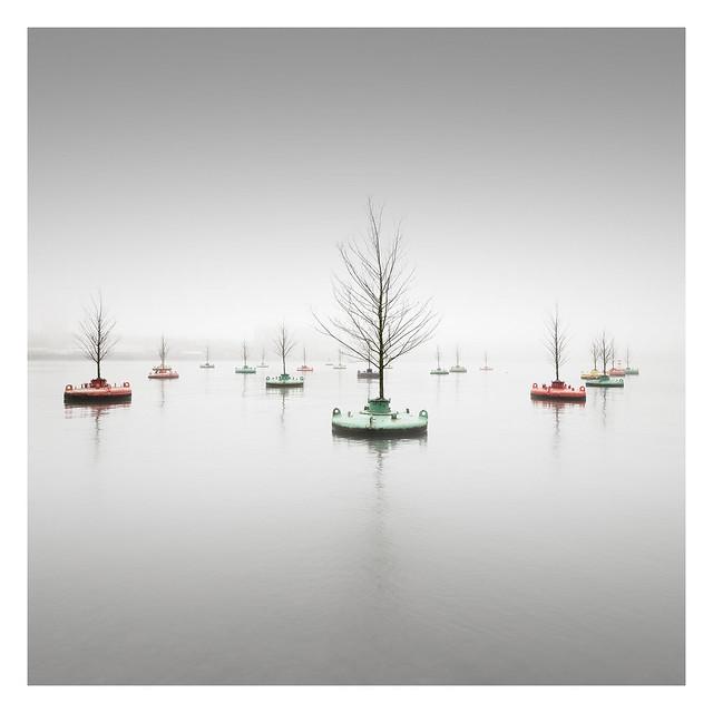 Floating Woods