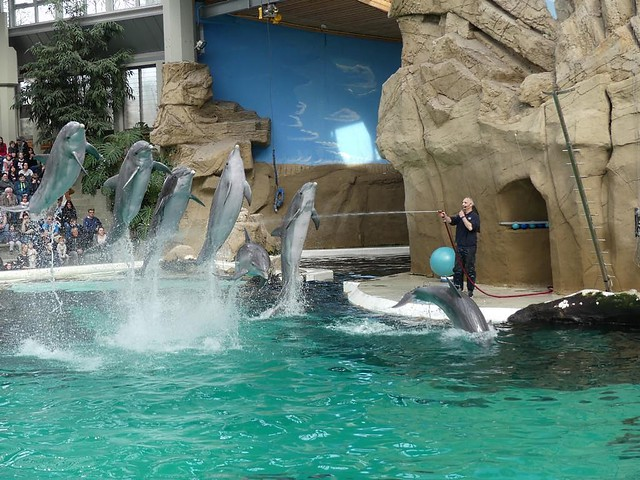 Delfin, Zoo Duisburg