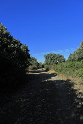 20121001 33 258 Jakobus Bäume Weg