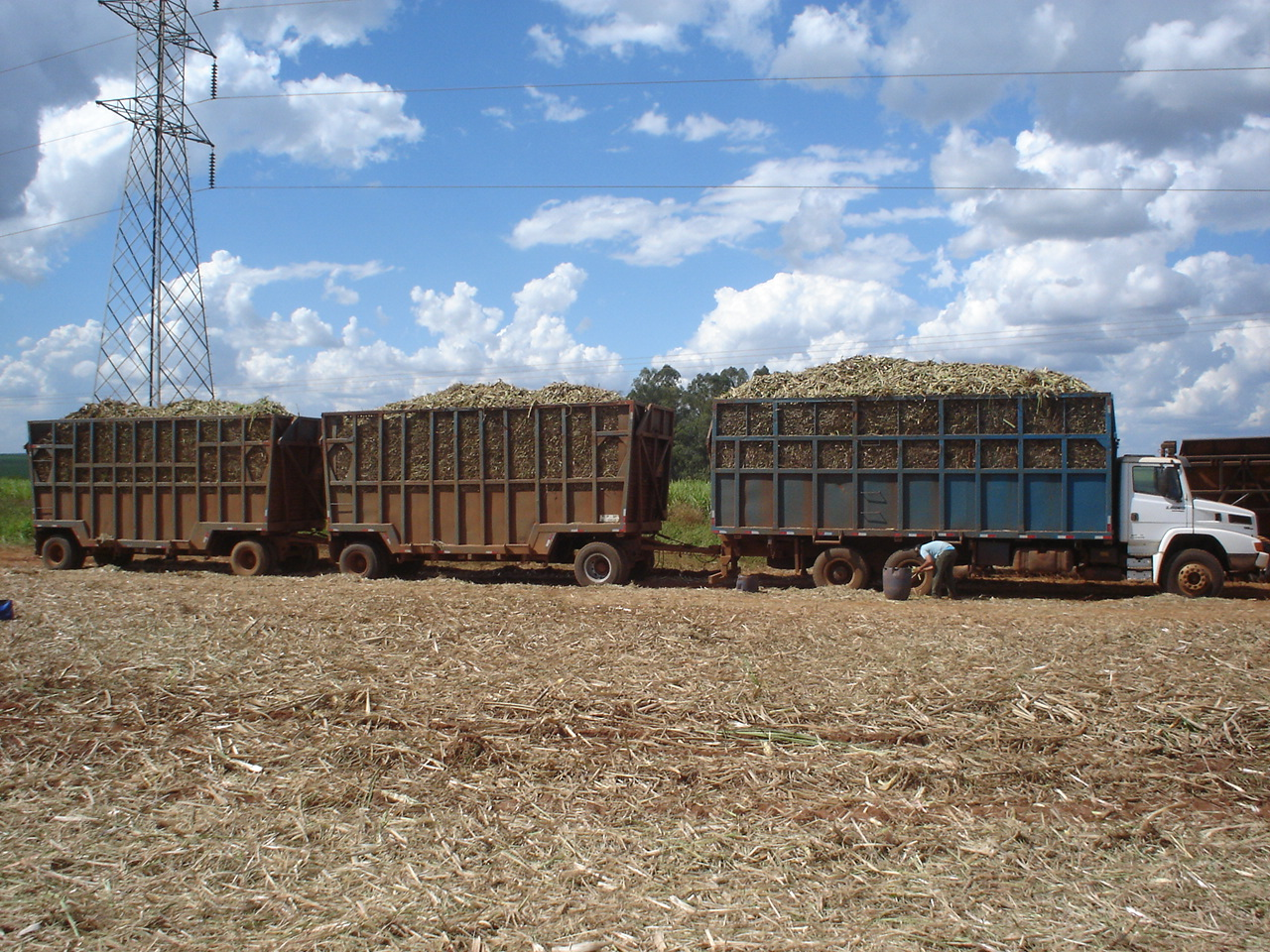 Sugarcane mechanical harvest in Jaboticabal, São Paulo, Brazil. Photo taken on November 14, 2006.