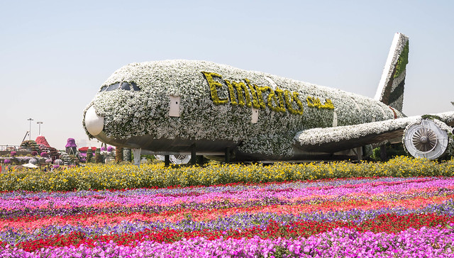 Dubai Miracle Gardens. (Explored 11/4/18), Panasonic DMC-GX7, Lumix G 20mm F1.7 Asph.