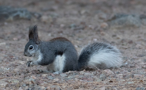 aberts_squirrel-20180404-100