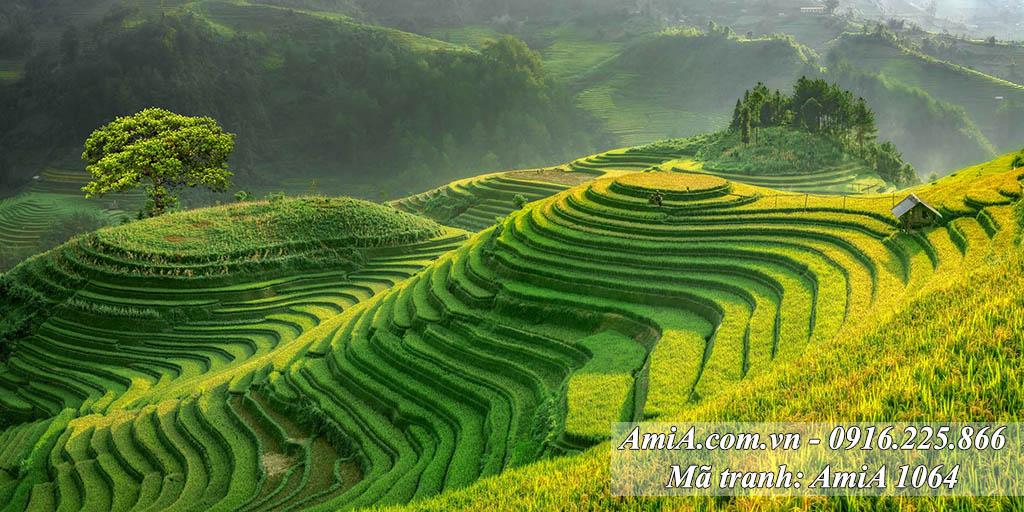 AmiA 1117 - Tranh đẹp chủ đề ruộng lúa bậc thang Việt Nam