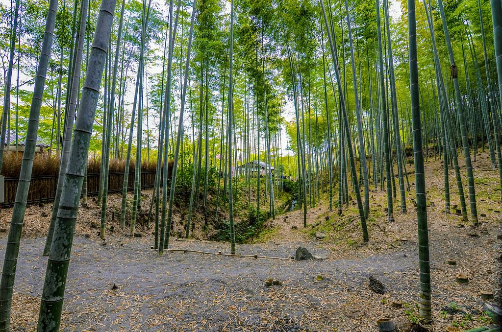 Bamboo grove house creek