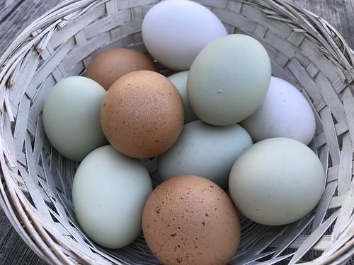 easter eggs IMG_2059
